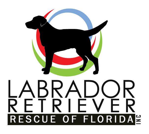 Lrrof Labrador Retriever Rescue Of Florida