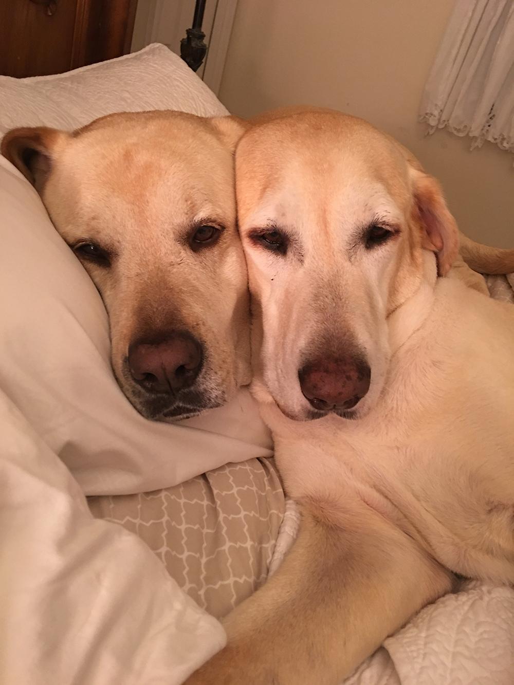 Success Stories by Name - Labrador Retriever Rescue of Florida