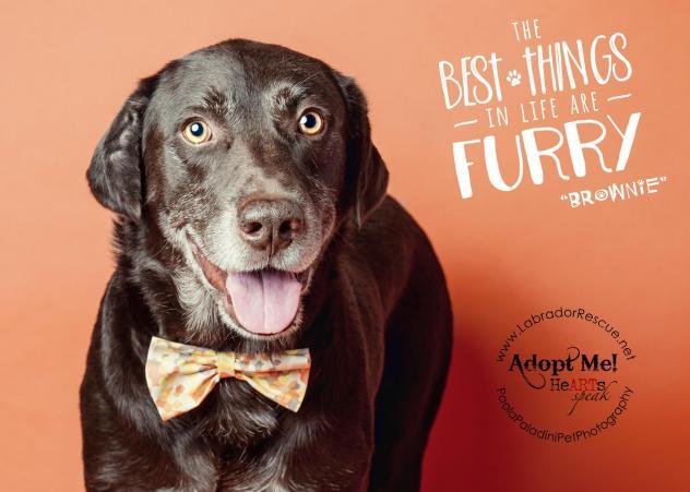 Adoption Process - Labrador Retriever Rescue of Florida