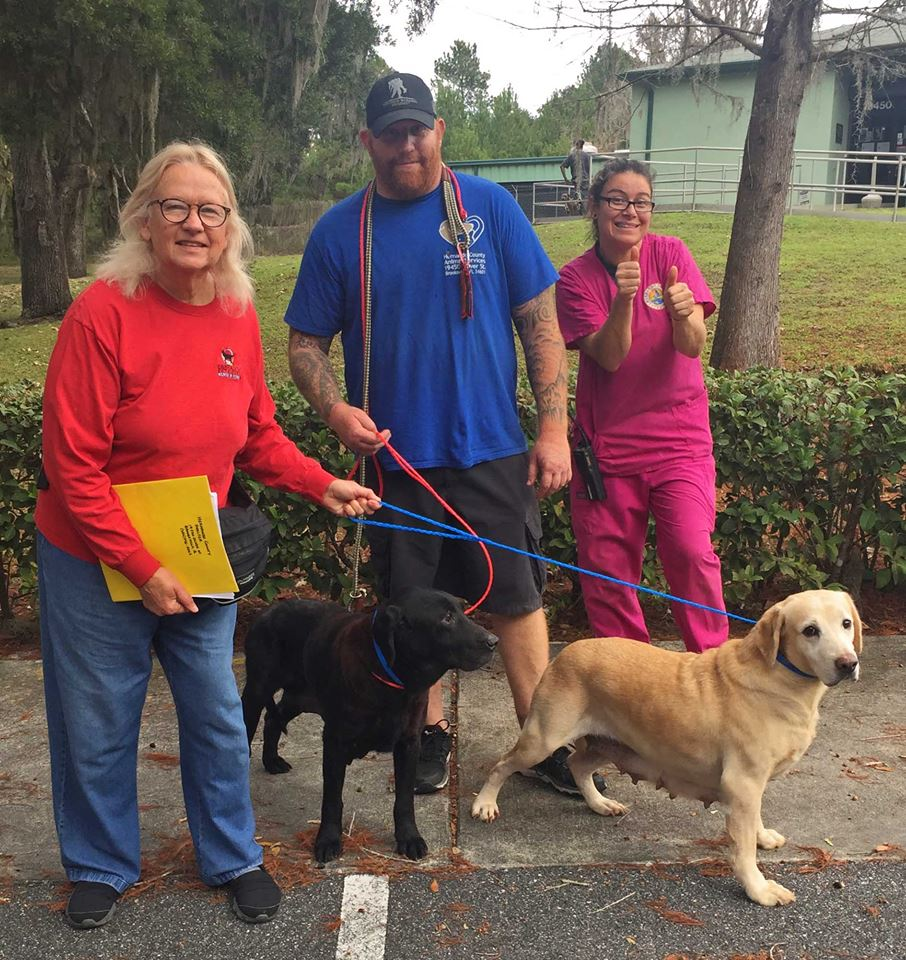 LRROF - Labrador Retriever Rescue of Florida